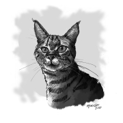 kittyhitch001.5